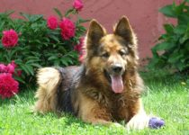 Popular german shepherd dog names