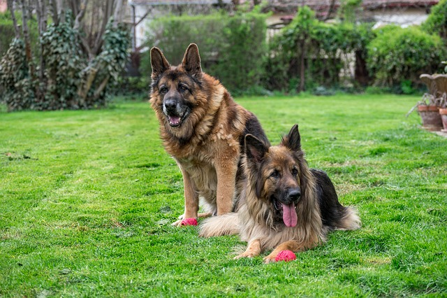Popular german shepherd names