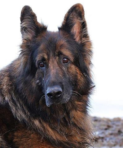 unisex german shepherd dog names