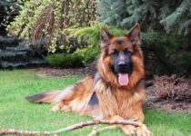 unisex german shepherd names